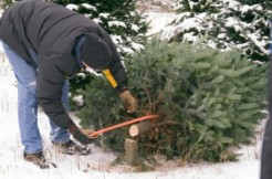 christmas-tree-farms