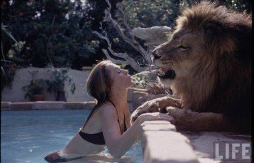 Winner: The lion