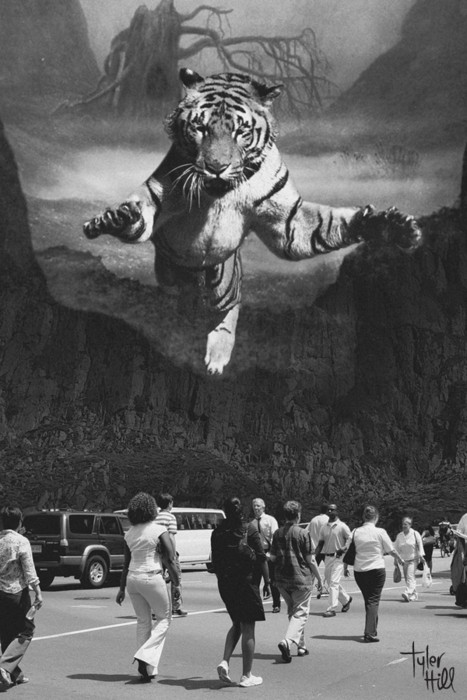 Winner: The tiger