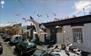 12-the-birds
