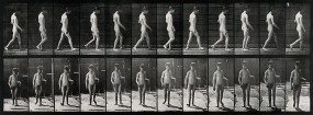 A man walking. Photogravure after Eadweard Muybridge, 1887