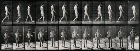 A man walking. Photogravure after Eadweard Muybridge, 1887