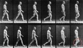 Eadweard Muybridge Man Walking